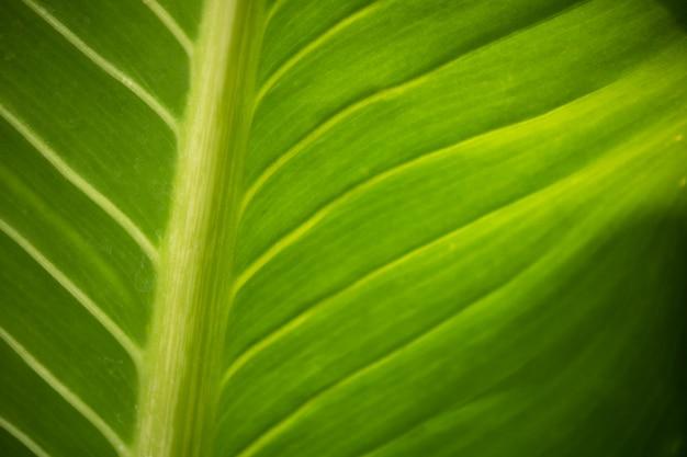 Sluit de groene achtergrond van de blad natuurlijke textuur