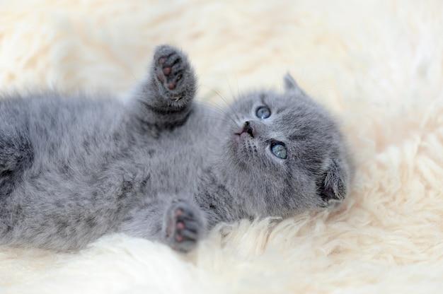 Sluit grappig klein grijs katje op witte deken