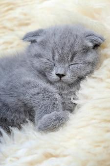 Sluit grappige kleine grijze kittenslaap op witte deken