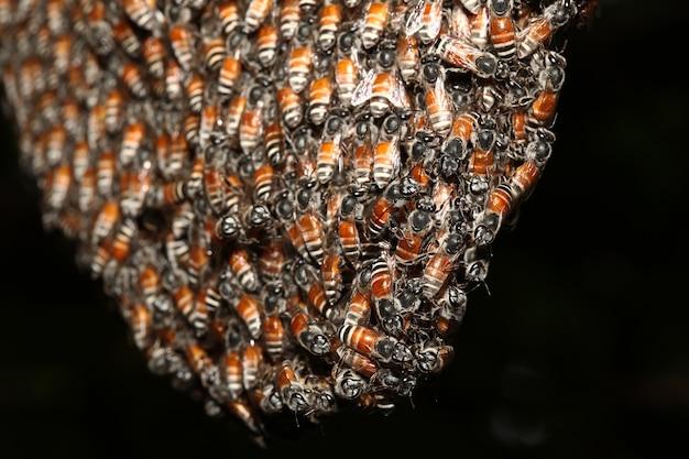 Sluit groepsbij in honingraat op boom omhoog