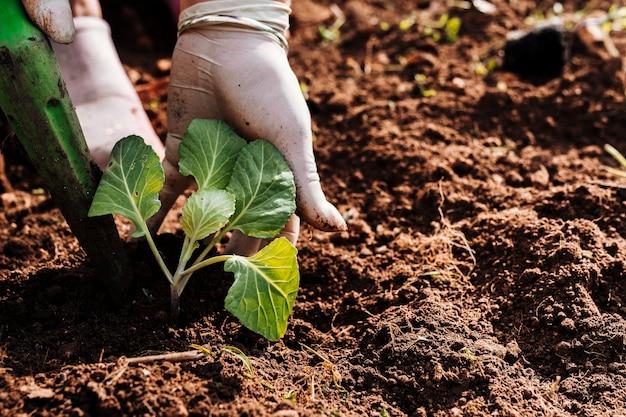 Sluit handen omhoog plantend in de grond