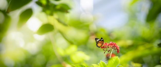 Sluit omhoog aardmening van oranje vlinder op vage achtergrond in tuin met exemplaar het ruimte gebruiken als achtergrondinsect, natuurlijk landschap, ecologie, het verse concept van de dekkingspagina.