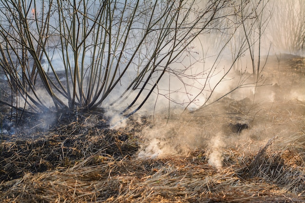 Sluit omhoog beeld van gebrand gras en struiken op gebied na bosbrand