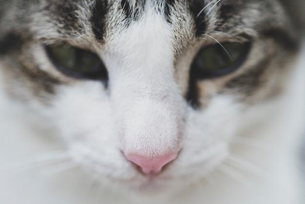 Sluit omhoog beeld van het gezicht van een kat