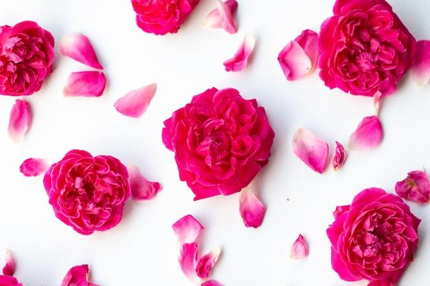 Sluit omhoog beeld van roze rozen op zwarte achtergrond