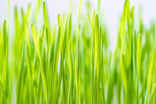 Sluit omhoog bladen van groen gras