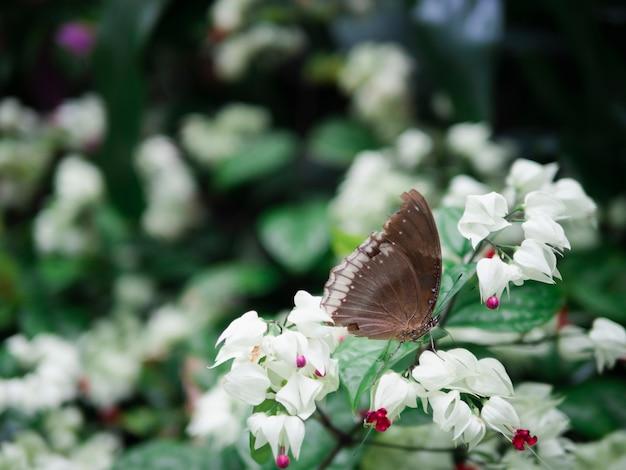 Sluit omhoog bruine vlinder op witte bloem met tuinachtergrond