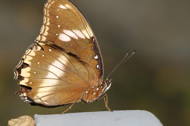 Sluit omhoog bruine vlinder