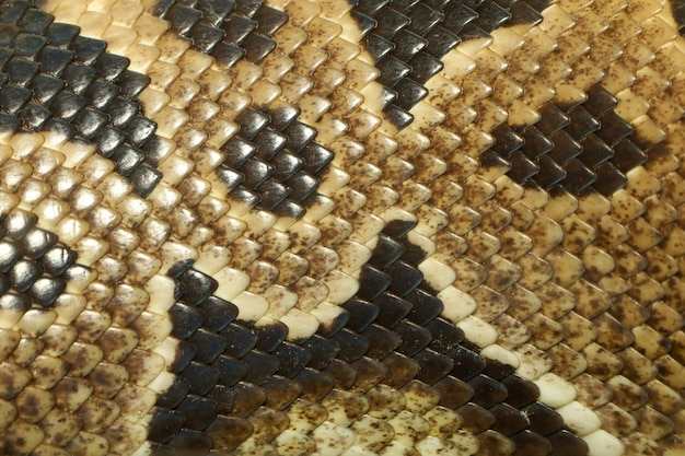 Sluit omhoog de achtergrond van de de slangtextuur van de huidbal python