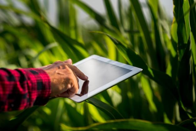 Sluit omhoog de mens gebruikend een tablet op een gebied