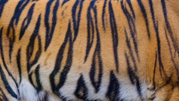 Sluit omhoog de textuurachtergrond van de tijgerhuid
