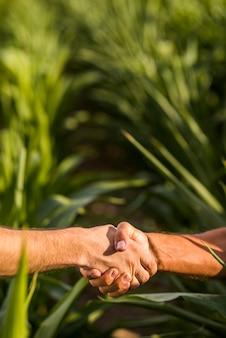 Sluit omhoog de zonnige dag van de mensenhanddruk
