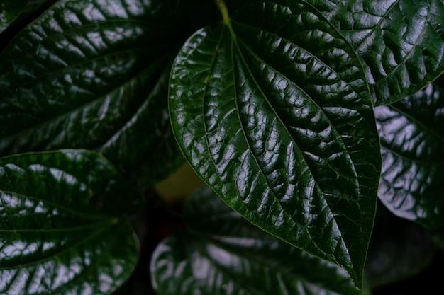 Sluit omhoog detail van groen boomblad in de wildernis