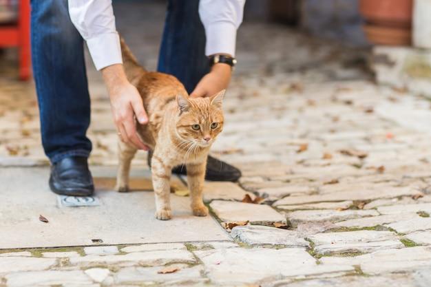 Sluit omhoog foto van rode kat met groene ogen kijkend recht naar camera