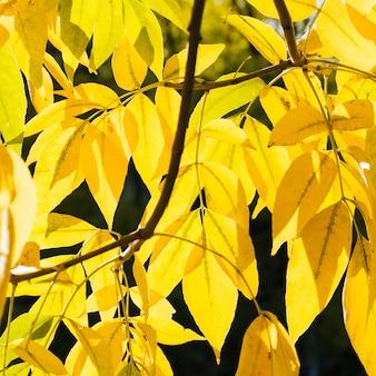 Sluit omhoog gele de herfstbladeren