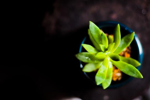 Sluit omhoog geschoten op cactus
