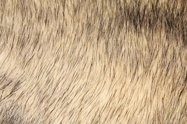 Sluit omhoog grijze hondhuid voor textuur en patroon.