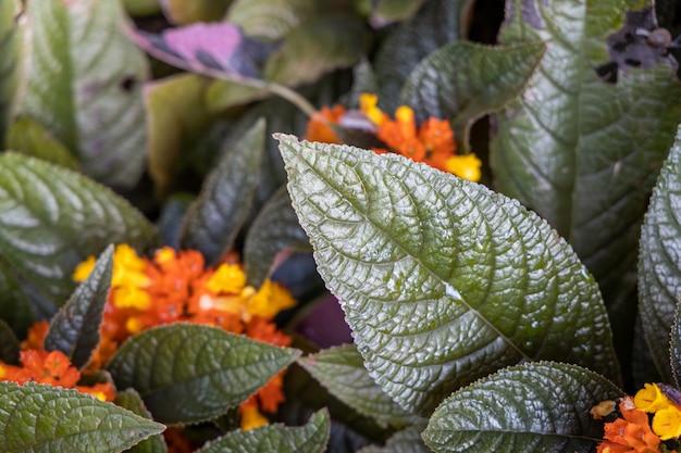 Sluit omhoog groen blad onder zonlicht in de tuin.