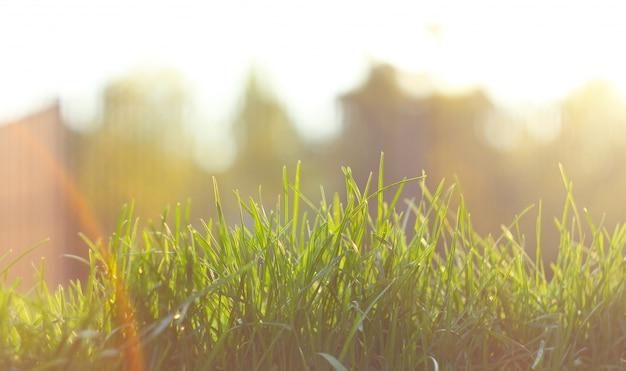 Sluit omhoog groen grasgebied met de achtergrond van het onduidelijk beeldpark