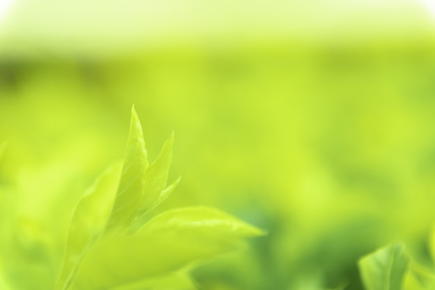 Sluit omhoog groene bladeren van de groene aard vage achtergrond van de meningstextuur in park, tuin of bos. gebruik om te schrijven of kopiëren in lege ruimte op groene natuur achtergrond.