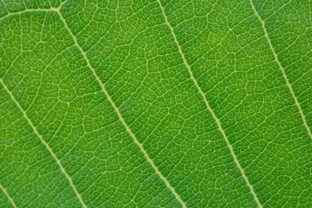 Sluit omhoog groene bladtextuur