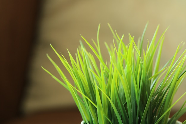 Sluit omhoog groene grasbladeren in bloempot