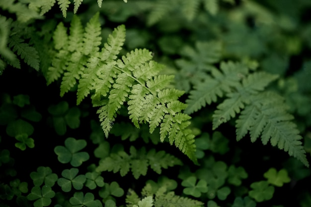 Sluit omhoog groene varenbladeren