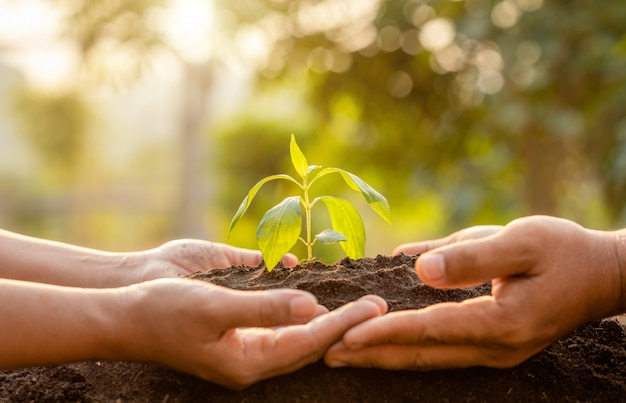 Sluit omhoog hand houdend jonge groene boomspruit en plantend in grond