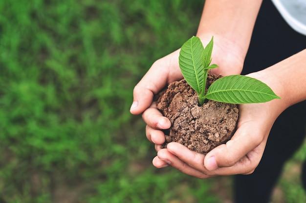 Sluit omhoog hand van kinderen die jonge plant op groene grasachtergrond houden. milieu aarde dag concept