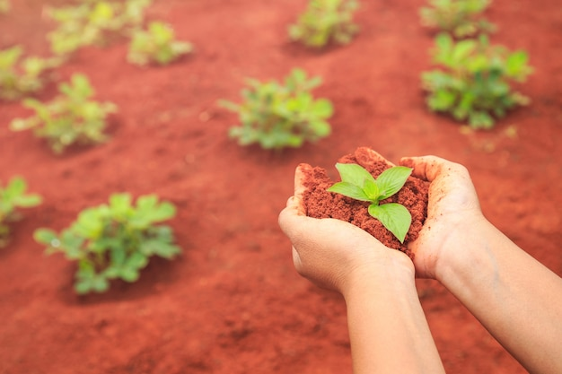 Sluit omhoog handen van mensen die grond en jonge plant houden. ecologie en groeiend plantenconcept