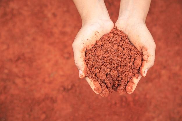 Sluit omhoog handen van mensen die grond houden om jonge plant te kweken.