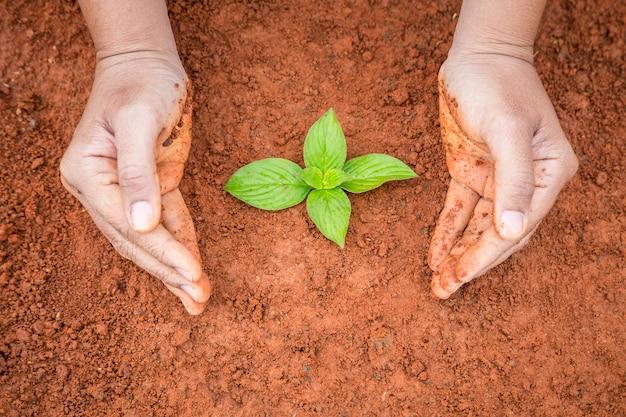 Sluit omhoog handen van mensen die jonge plant op rode grond beschermen