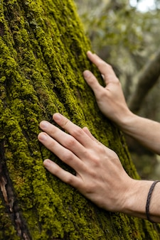 Sluit omhoog handen wat betreft boommos