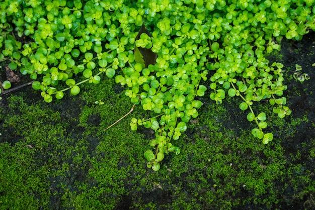Sluit omhoog het mooie groene mosbos.