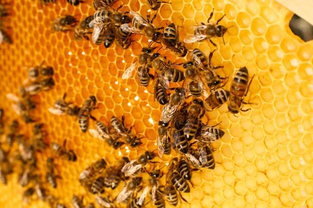 Sluit omhoog honingraat in houten bijenkorf met bijen op het. bijenteelt concept.