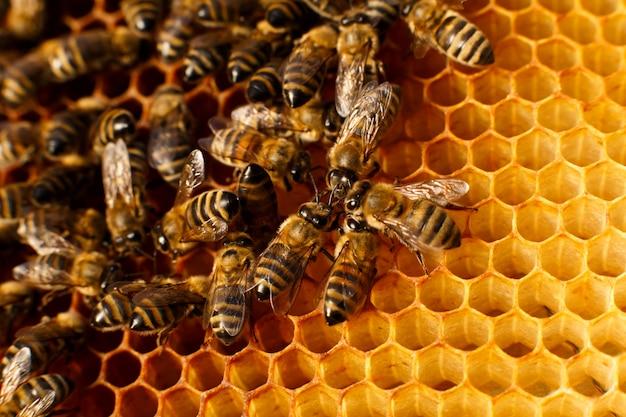 Sluit omhoog honingraat in houten bijenkorf met bijen op het.