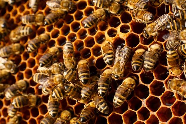 Sluit omhoog honingraat in houten bijenkorf met bijen op het