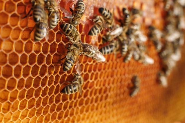 Sluit omhoog honingraat in houten frame met bijen op het