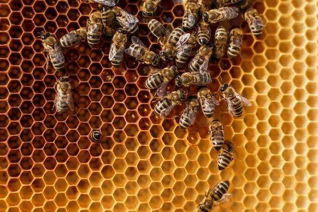 Sluit omhoog honingraat in houten frame met bijen op het.