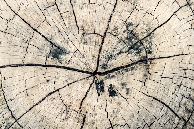 Sluit omhoog houten dwarsdoorsnede en oude donkere bruine boomstamtextuur of achtergrond.