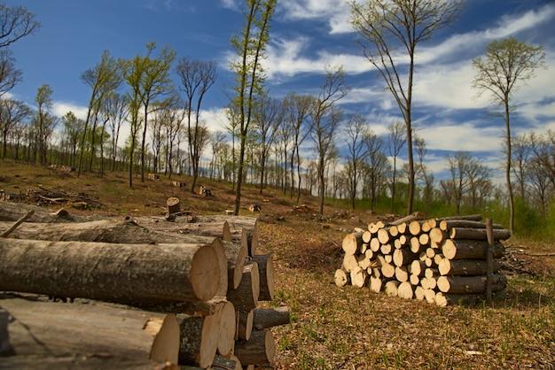 Sluit omhoog houten gestapelde gezaagde logboeken voor achtergrond of abstractie