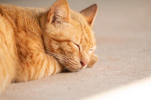 Sluit omhoog leuke gembergestreepte katkat