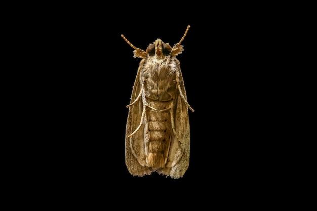 Sluit omhoog macro van volledig lichaam van het insect