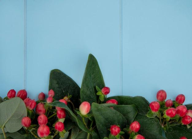 Sluit omhoog mening van bloemen op blauwe oppervlakte