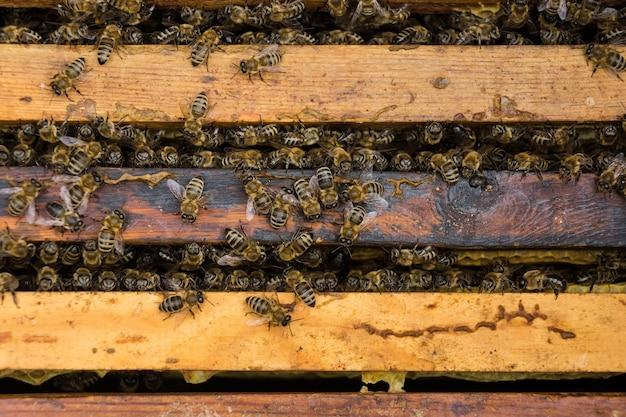Sluit omhoog mening van de werkende bijen op honeycells