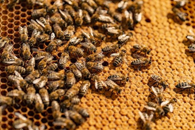 Sluit omhoog mening van de werkende bijen op honingscellen