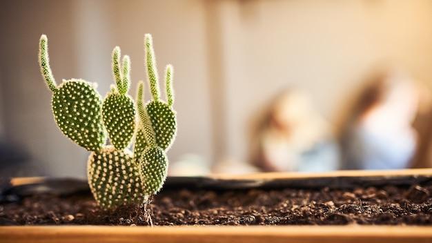 Sluit omhoog mening van groene succulent in een kleipot in zolderbinnenland in koffie. afbeelding met een klein scherptediepte en copyspace voor tekst en ontwerp. banner 16 in 9-formaat