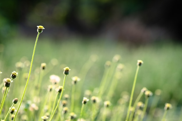 Sluit omhoog mooie mening van aard groen gras op de vage achtergrond van de groenboom