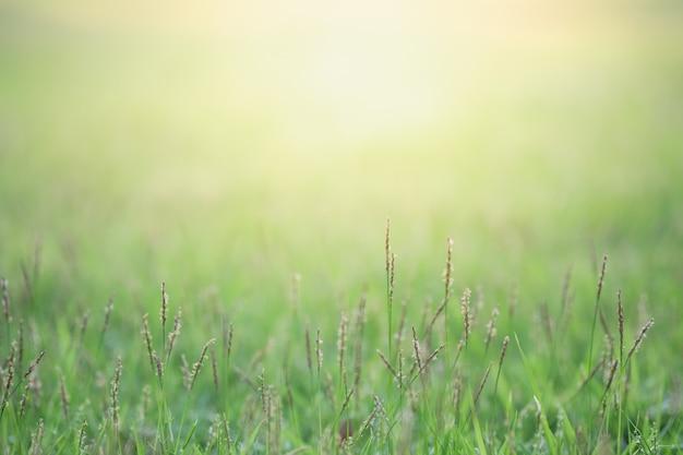 Sluit omhoog mooie mening van aard groen gras op vage groenboom met zonlicht in openbaar tuinpark.