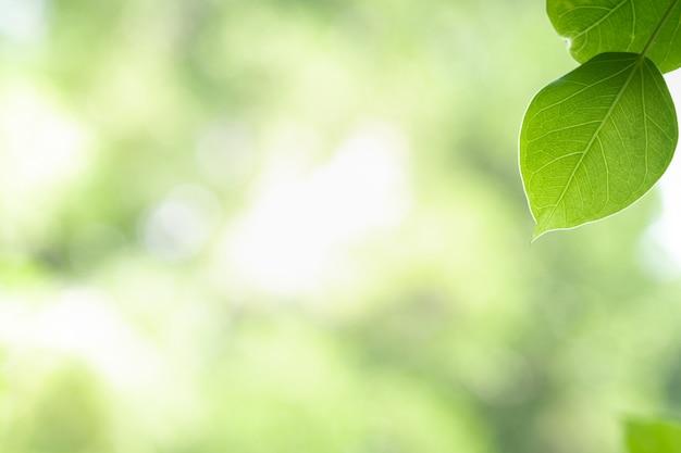 Sluit omhoog mooie mening van aard groene bladeren op de vage achtergrond van de groenboom met zonlicht in openbaar tuinpark